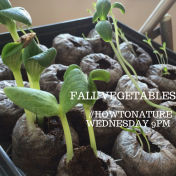 Fall vegetable How To Nature Twitter chat
