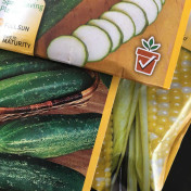 Where will I plant these cucumber, squash and corn seeds? In our new raised beds.