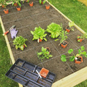 raised garden bed, vegetable garden