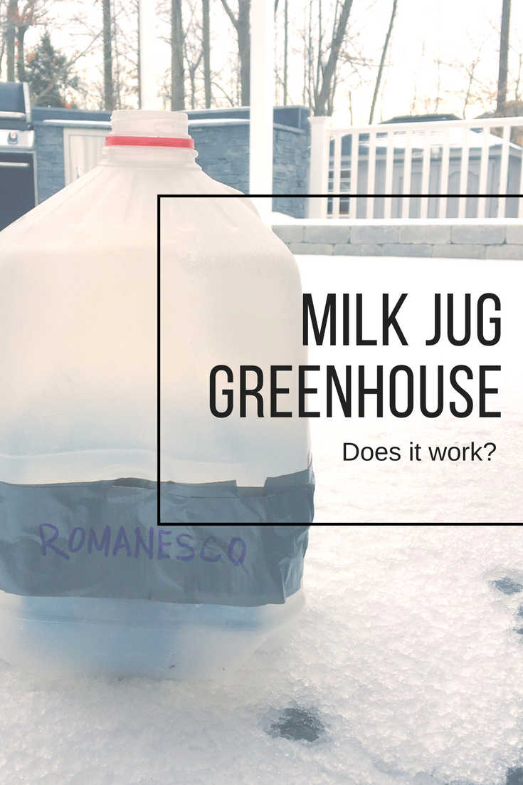 Milk Jug Greenhouse Does It Work