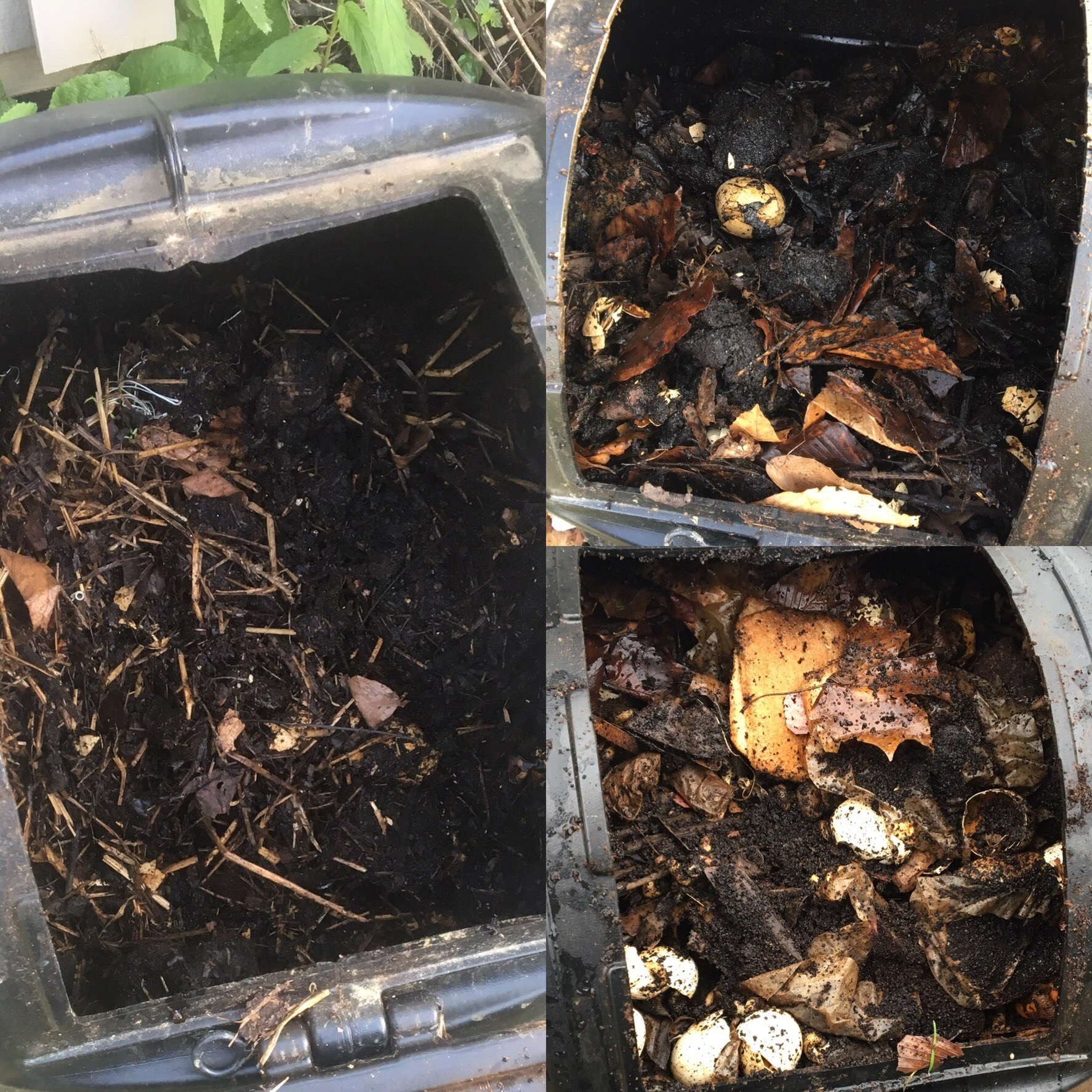 My compost July 21 (left), on April 15 (top) and December 26 (bottom).